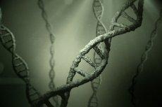 """Dziedziczenie """"pozagenowe""""  - co jest zapisane w genach?"""