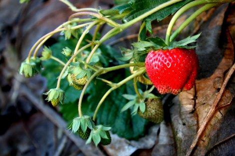 Substancje chemiczne w żywności i kosmetykach chronią nas przed rozwijającymi się w nich mikroorganizmami.