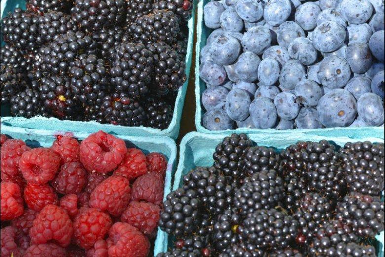 Jeżyny, borówki, maliny, a także jagody i porzeczki są niskokaloryczne i zawierają niewiele cukru.