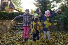 Przedszkole Leśne to zespół kilku przedszkoli, które korzystając z dobrodziejstw przyrody zapewniają dzieciom wszechstronny rozwój