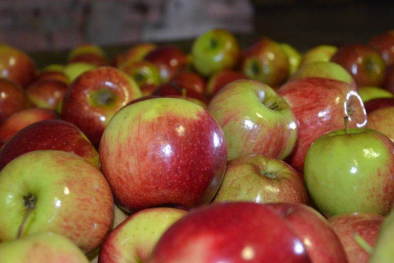 One apple a day keeps your doctor away - mawiają Amerykanie. Jabłka jeść warto, szczególnie na surowo. Są źródłem witamin i antyoksydantów